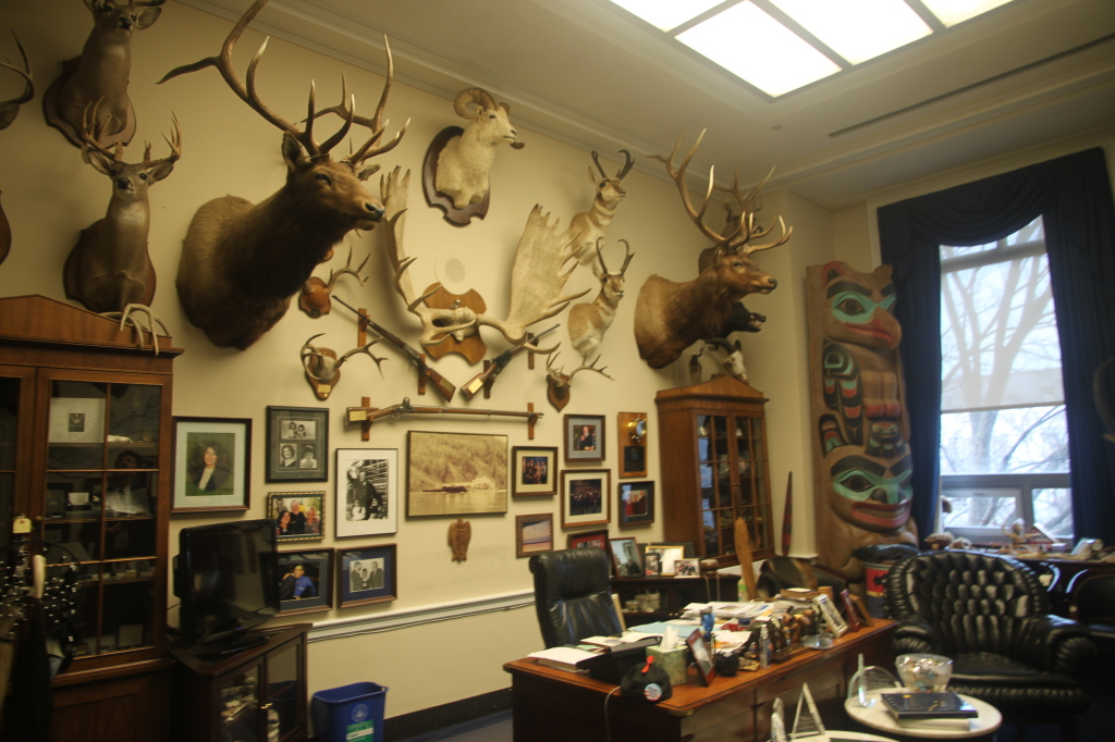 "Rep. Don Young keeps an ""animal trophy"" collection in Rayburn - his personal office includes animals from North America."