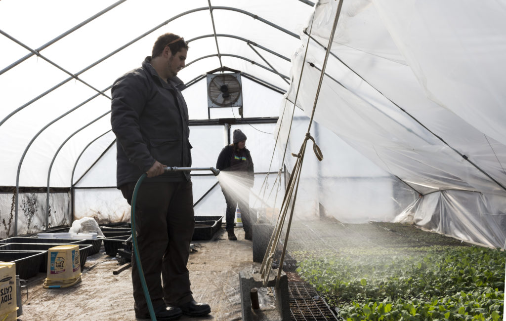 Jared Planz waters plants in one of the greenhouses at Clagett Farm in Upper Marlboro, Md.