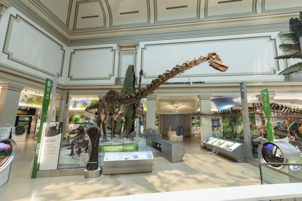 "In the ""David H. Koch Hall of Fossils—Deep Time,"" a 31,000-square-foot dinosaur and fossil hall, opening June 8 at the Smithsonian's National Museum of Natural History, visitors can lookup to long-necked dinosaurs as they reach out to eat trees high above their heads."