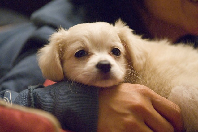 Is A Maryland Law Banning The Retail Sale Of Puppies
