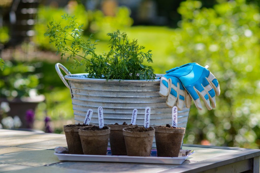Local gardening experts share tips for starting your own at-home garden.