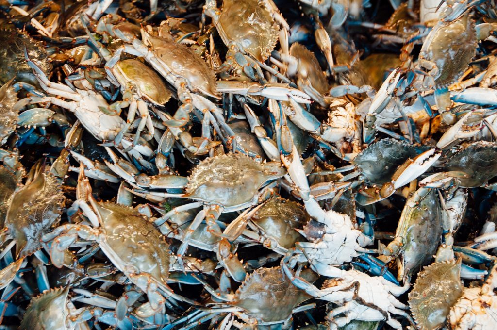 Since 1986, Maryland's crab industry has relied upon migrant workers.