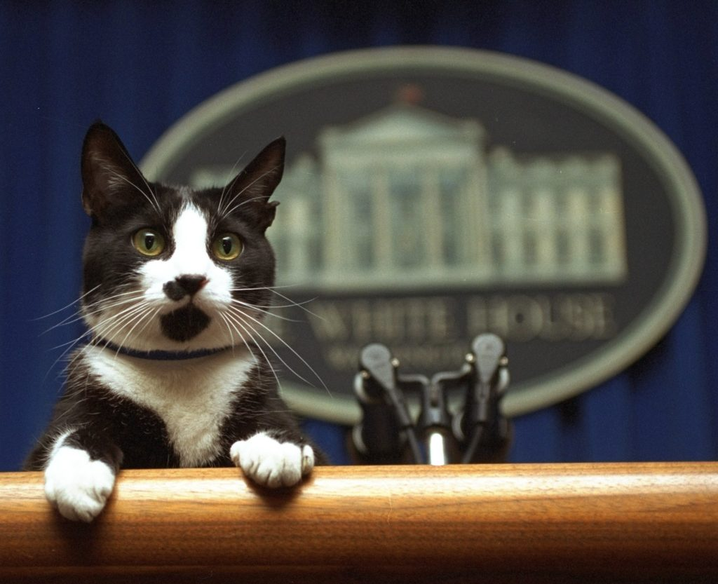 """President Bill Clinton's cat Socks """"answering questions"""" from reporters in the White House Briefing Room -March 19, 1994."""