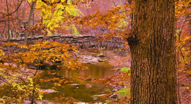 """From the book """"A Year in Rock Creek Park: the Wild, Wooded Heart of Washington, DC"""" by Melanie Choukas-Bradley."""